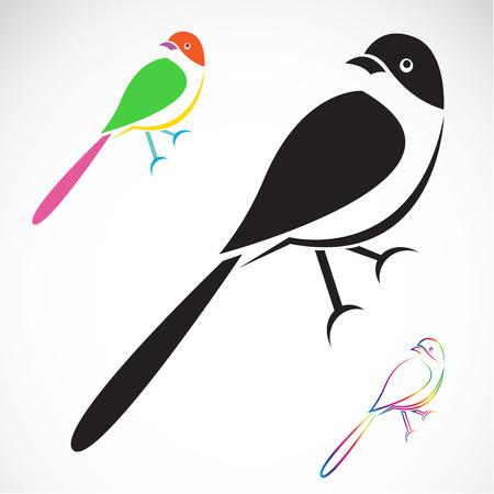Vector de imagen de un ave en el fondo blanco Ilustración de vector