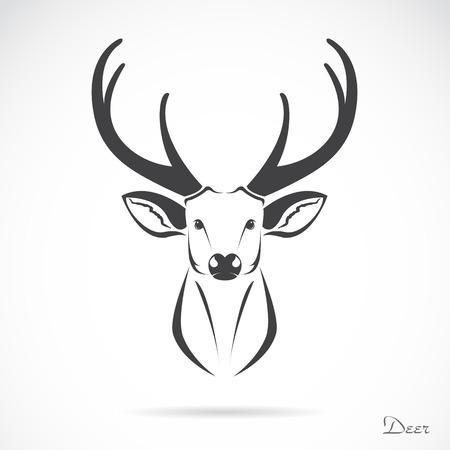 venado: imagen de una cabeza de ciervo en blanco
