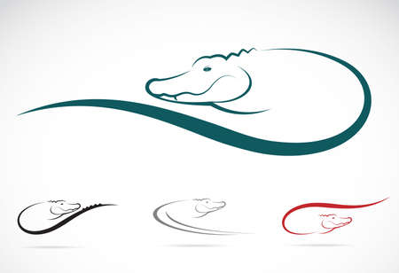 image of an crocodile on white Vector