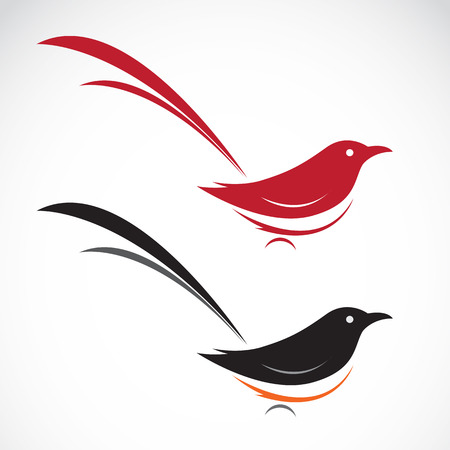the magpie: Vector image of an magpie on white background Illustration