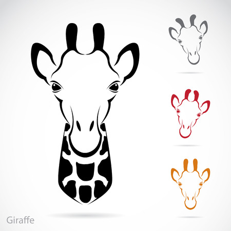 camelopardalis: Vector image of an giraffe head on white background