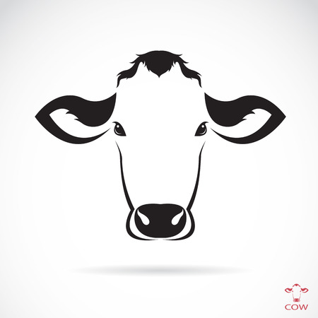 cow: Vector image of an cow head on white background