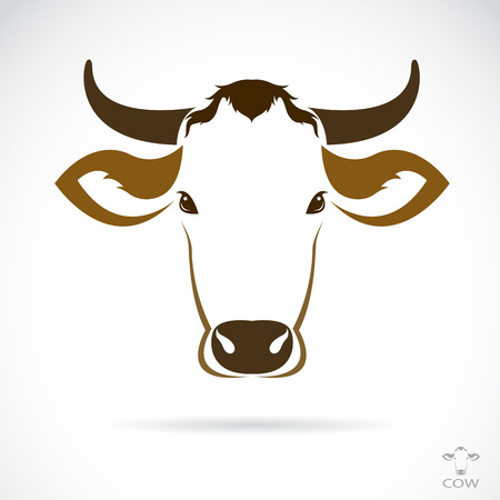 k�lber: Vector Bild von einer Kuh Kopf auf wei�em Hintergrund