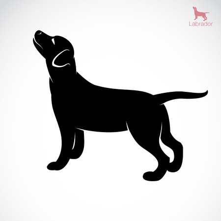 labrador retriever: Vector image of an dog labrador on white background