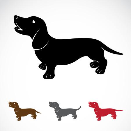 白い背景上の犬 (ダックス) のベクトル画像  イラスト・ベクター素材