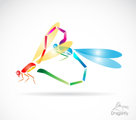 breeding: Two colorful dragonfly breeding on a white background Illustration
