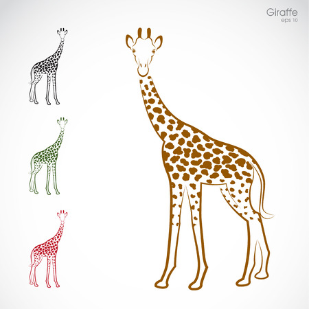 Vector image of an giraffe on a white background