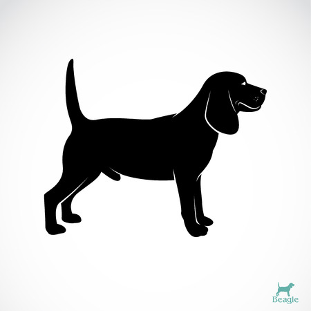 hound: Vector image of an dog beagle on white background Illustration
