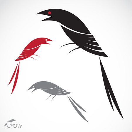 Vector image of an crow on white background Vector