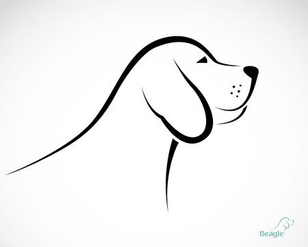 beagle puppy: Vector image of an dog beagle on white background Illustration