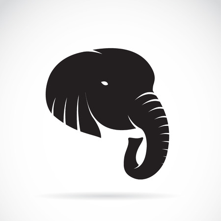 kel: Ilustrační obrázek z sloní hlavy na bílém pozadí Ilustrace