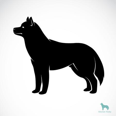 huskies: Vector de imagen de un perro husky siberiano en fondo blanco Vectores