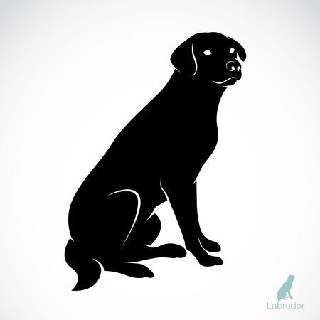 perro labrador: Vector de imagen de un labrador perro sobre fondo blanco