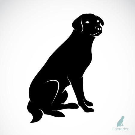 dog: Vector image of an dog labrador on white background