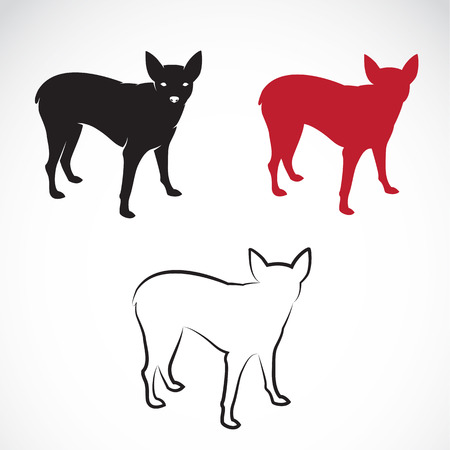 pincher: Vector image of a miniature pinscher on white background