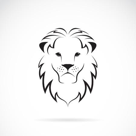 állat fej: Vektor kép egy oroszlán feje fehér alapon