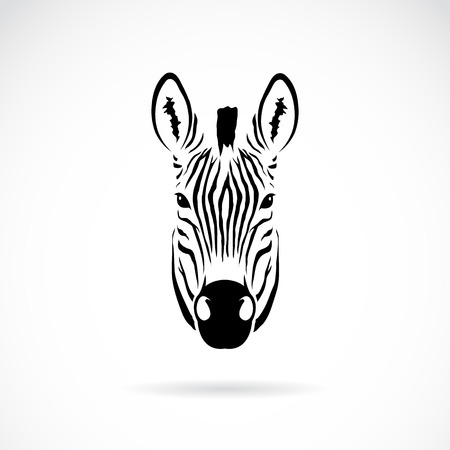 close up face: Vector image of an zebra head on white background