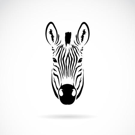 állat fej: Vektor kép egy zebra fej fehér alapon Illusztráció