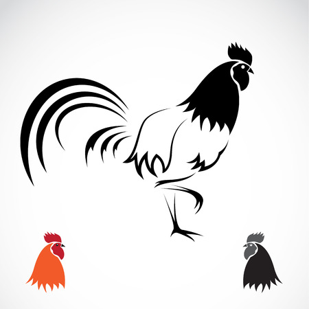 fowls: Vector image of an cock on white background