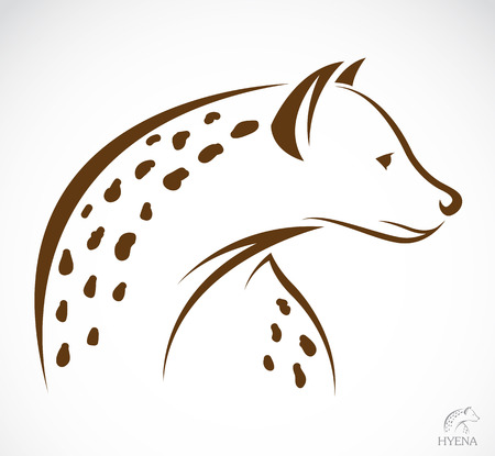 Vector image of an hyena on white background.