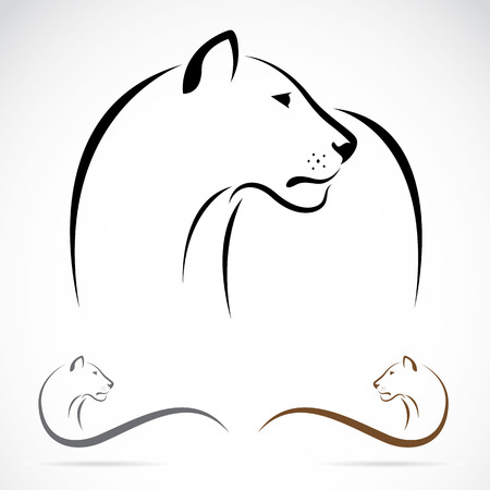 Vector image of an female lion on white background. Vector