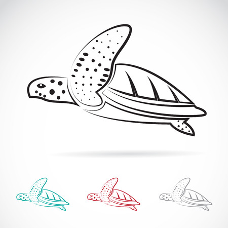 Vector image of an turtle on white background Vector