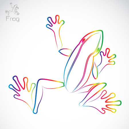 webbed legs: Vector image of an frog on white background