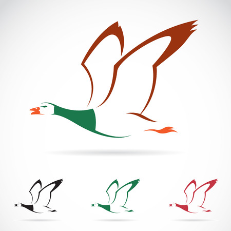 dabbling duck: Vector image of an flying wild duck on white background