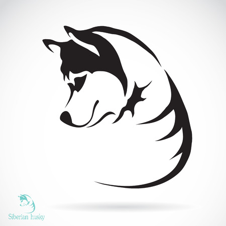dog ears: Vector image of a dog siberian husky on white background Illustration