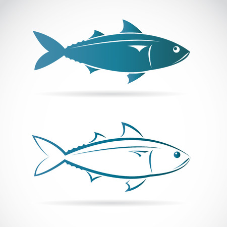 fillet: Vector image of an mackerel on white background