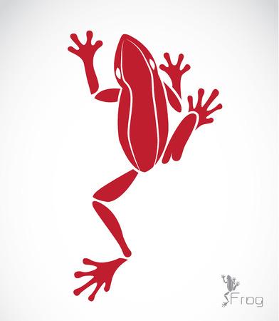rana venenosa: Vector de imagen de una rana en el fondo blanco