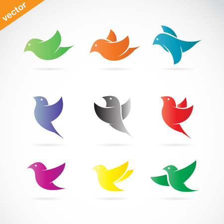 Vector group of colorful bird on white background Vector