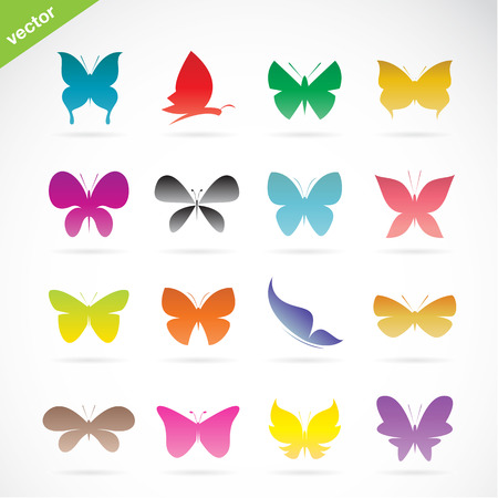 Vector group of colorful butterfly on white background Vector