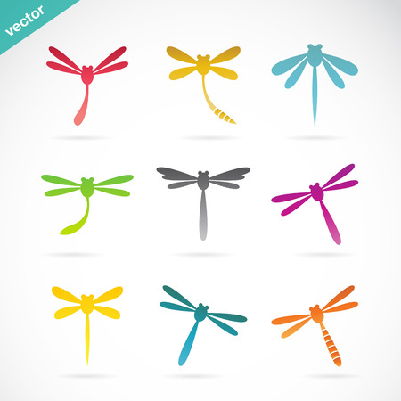 dragonfly wings: Vector group of colorful dragonfly on white background