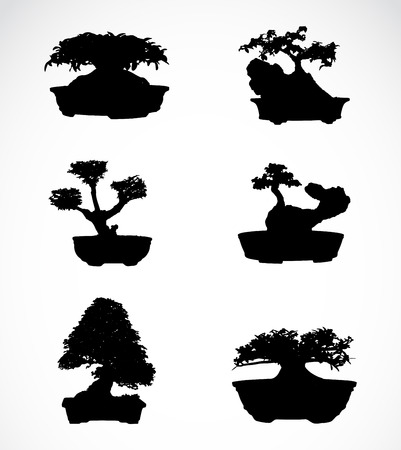 asterids: Set of trees in pots on white background
