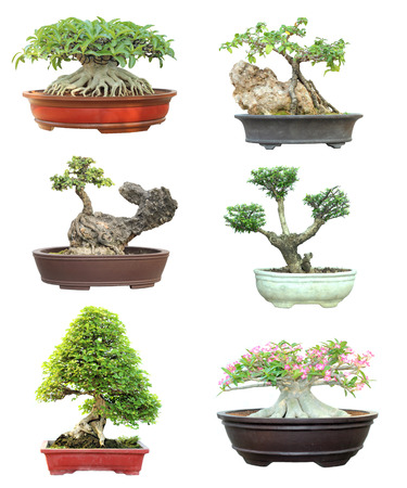 Set of trees in pots on white background photo