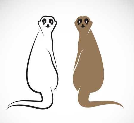 suricata suricatta: Vector image of an meerkat on white background