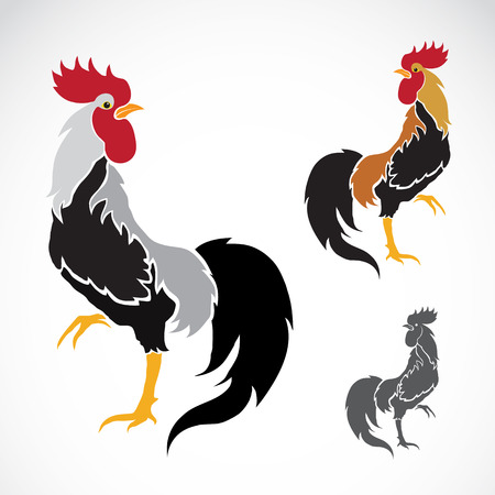 Vector image of an cock on white background Vector