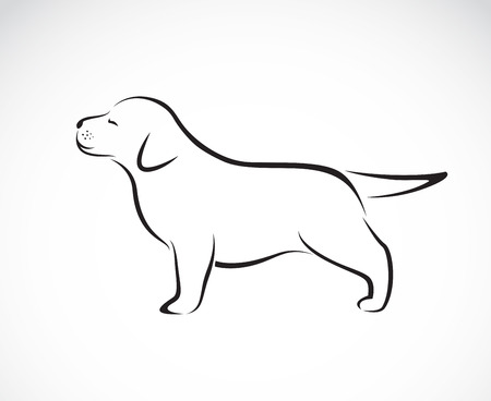 outlines: Vector image of labrador puppies on white background Illustration