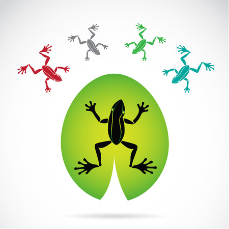 tree frogs: image of a frog on white background