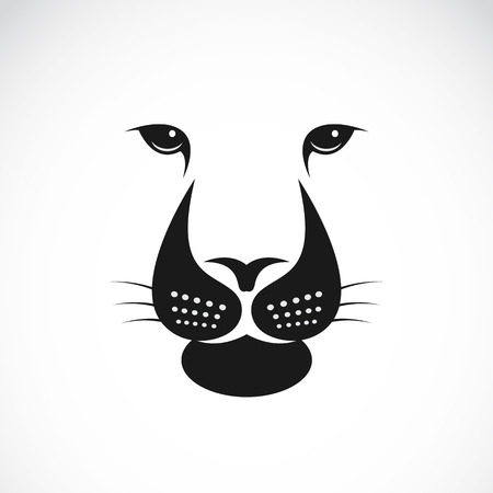 leo: Vector image of an lions face on white background