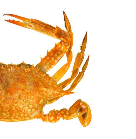 blue swimmer crab: Steamed blue swimmer crab on white background,