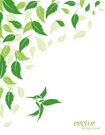 hojas parra: Hojas y colibríes verdes Fondo abstracto con lugar para el texto. Vectores