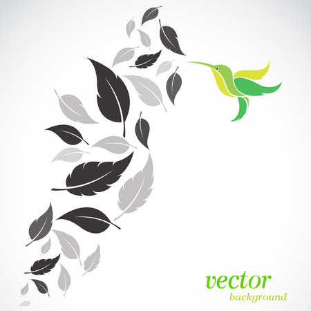 Abstract  leaves and hummingbirds background with place for your text. Vector