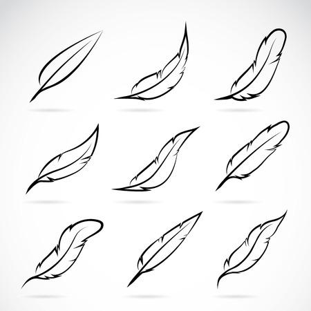 pluma blanca: Grupo de vector de la pluma en el fondo blanco Vectores
