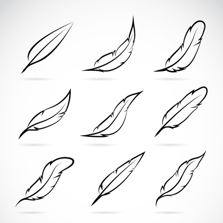 feather quill: Vector group of feather on white background Illustration