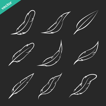 Vector group of feather on black background Illustration