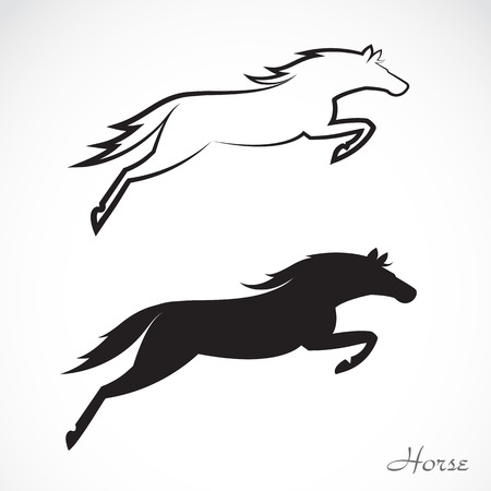 paddock: Vector image of an horse on white background