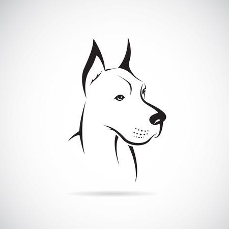 doberman: Bild von einem Hund (Deutsche Dogge) auf wei�em Hintergrund Illustration