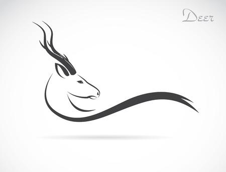 動物: 一個鹿頭的白色背景上的圖像